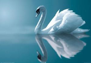 swan paramahansa