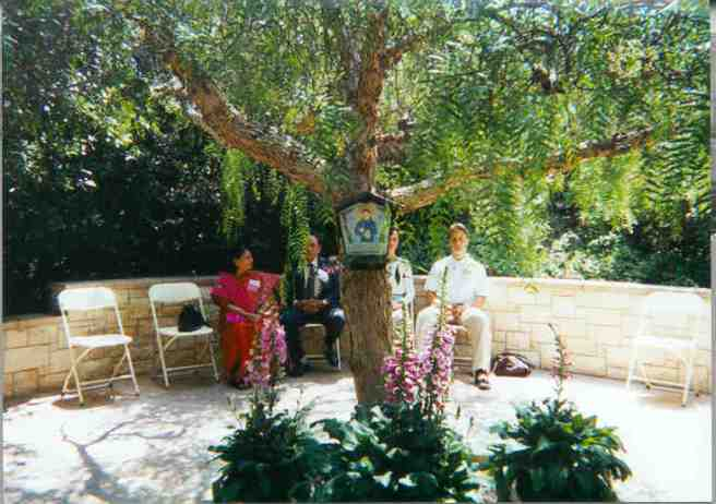 stfrancis_tree-mother-center