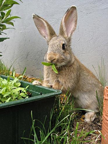 rabbit in the garden2_Fotor