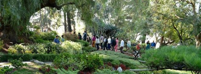 Encinitas garden devotees walking Crop