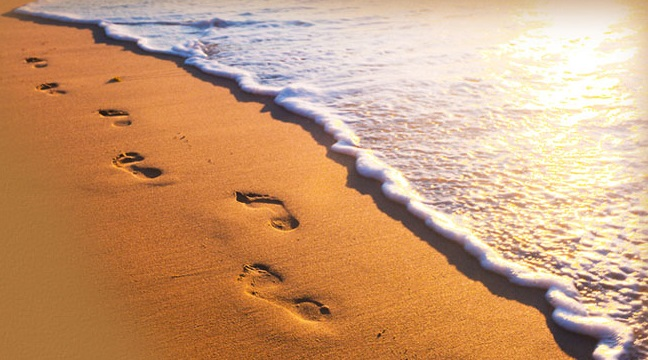 footprints in sand crop